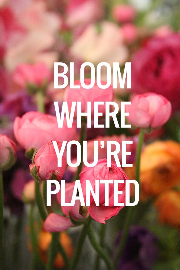photo How to Bloom Where Youre Planted